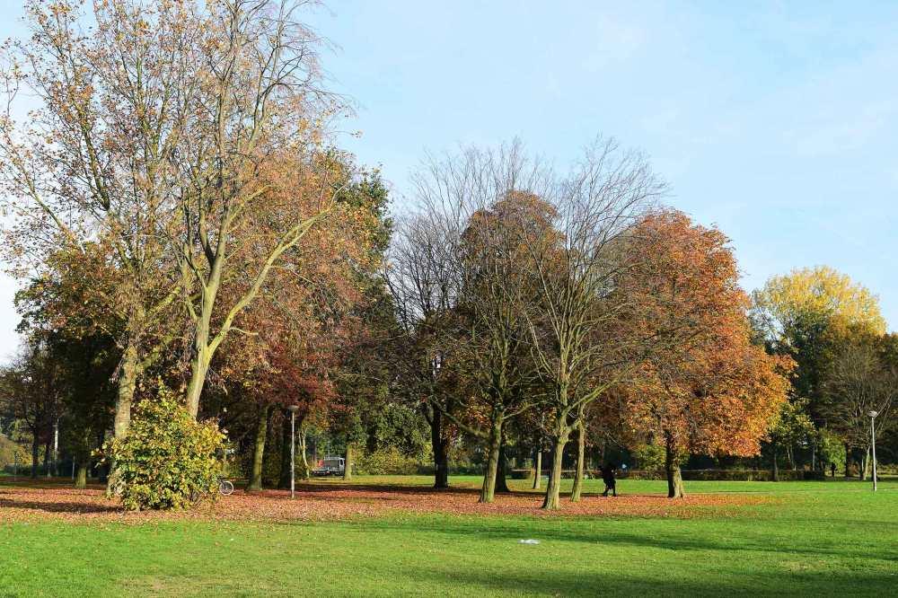 Dennenrode-park